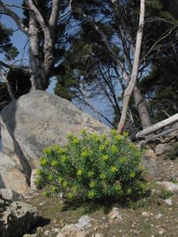 bäume in mallorca