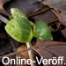 Online-Veröff.: Hetzel & Gausmann:  Aucuba im mittleren Ruhrgebiet